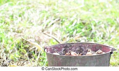 Gardener puts onions in bucket - Gardener puts onions in a...