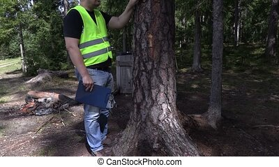 Environmental inspector trying to get out nail out of tree