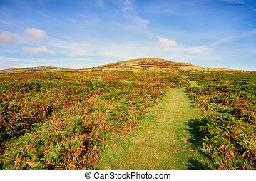 Dartmoor in Devon - Dartmoor National Park, looking towards...