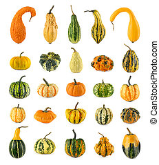 Twenty-five different ornamental pumpkins - High resolution...