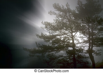 Forest foggy sunrise with light rays