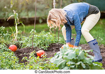 Beautiful young blond woman in her garden harvesting...
