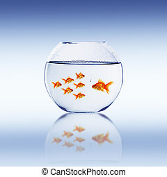 Goldfish swim in an aquarium with water