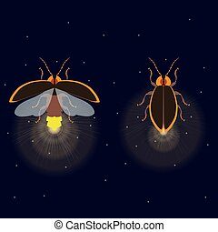 Firefly with open and closed wings - Firefly bug with open...