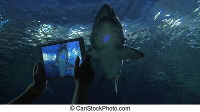 Shooting shark with digital tablet in oceanarium - Woman...