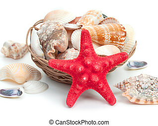 Seashells background with sea star isolated on a white