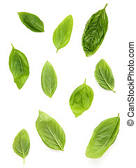 Fresh sweet basil leaves isolated on white background. Sweet...
