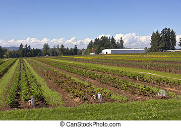 Agricultural fields in rural Oregon state.