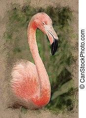Pink Flamingo - A vivid closeup shot of a gorgeous pink...
