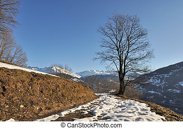 tree in winter on a mountain path with snow