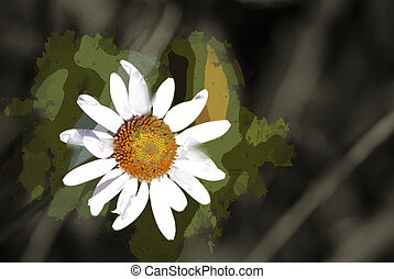 Daisies in green meadow - One sunlit Daisy in green meadow...