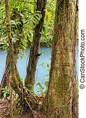 Rio Celeste, Costa Rica - Rio Celeste, Tenorio National...