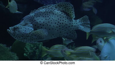 Diverse undersea world exhibited in oceanarium - Different...