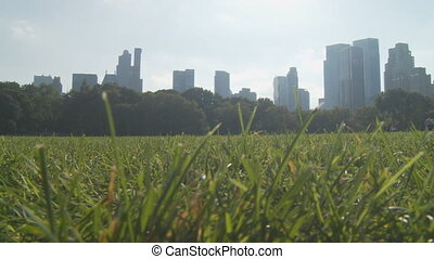 pan shot grass and skyscrapers