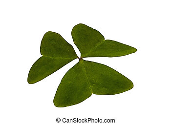 Single Isolated Green Three Leaf Clover on White Background...