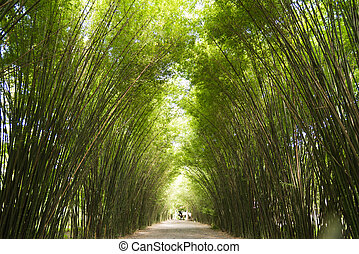 Bamboo Trees Tunnel - Fantastic of bamboo trees tunne in...