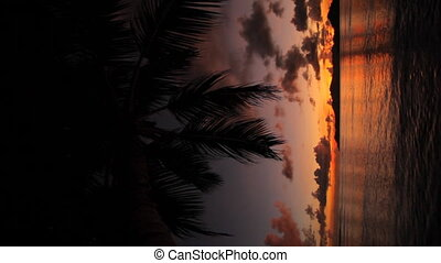 dark colorful sunset vertical - silhouette of palm leaves at...