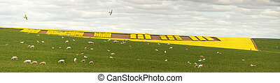 Creative Canola Farming Central West NSW - Patterns of...