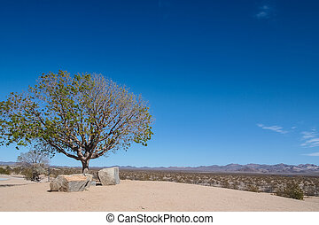 Tree and stone on the rest area beside California Desert...