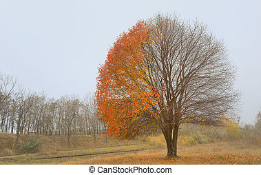Lonely beautiful autumn tree