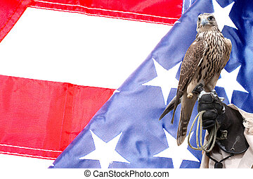 Falcon on handlers hand on US flag