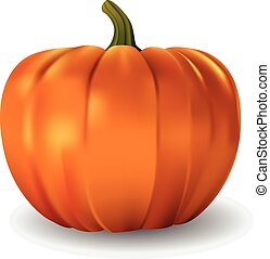 Realistic vector pumpkin on white background.