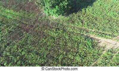 Alone tree in the fields - Aerial view alone tree in the...
