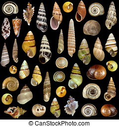 Sea shells on black background - Close-up shells set...