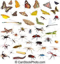 Set of insects over white background - Set of colorful...