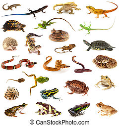Collection of reptiles and amphibians - Set of amphibians...