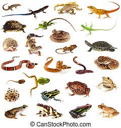 reptiles, Colección, anfibios