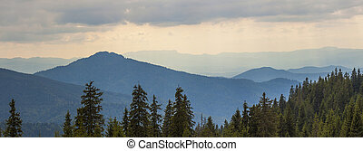 Panorama of sunset in Carpathian mountains with tops of pine trees