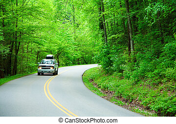Road through the woods - Two lane road curving through the...