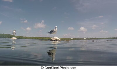 Seagull on a buoy floating in the water Fl Keys