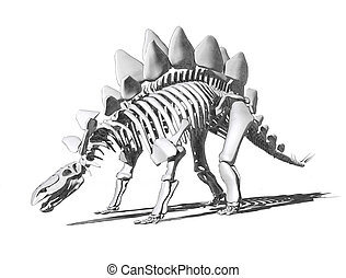 Stegosaurus Skeleton Drawing