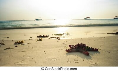 starfish on african seashore with boats in ocean on the background, timelapse