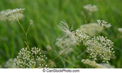 Grass in meadow close-up, Russia - Grass in a meadow...