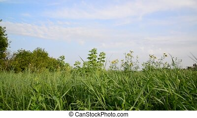 Nature of central Russia in summer - Nature of central...