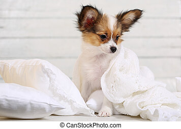 cute puppy on white pillows