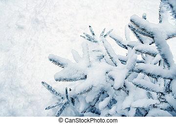 demand winter forest background