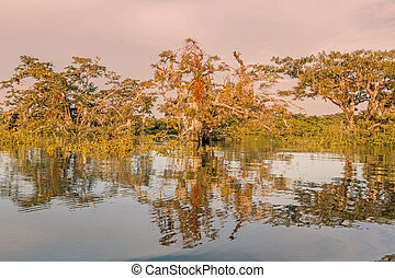 Mangroves Trees Growing In Amazonian Forest, National Park...