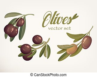 Yellow and ripe berries of olives with bleaks. Logotype for...