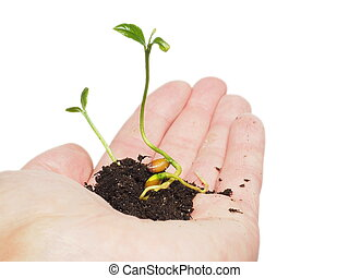 Small plant or tree growing in a tiny pile of fresh soil, person's hand