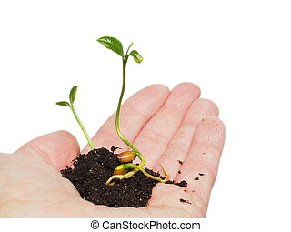Small plant or tree growing in soil, person's hand