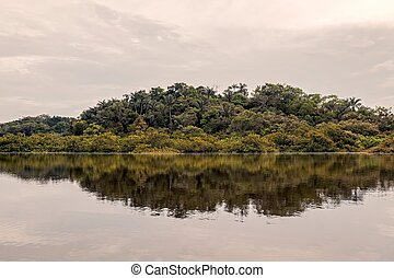 Tropical Trees From Amazonian Jungle, Cuyabeno Wildlife...