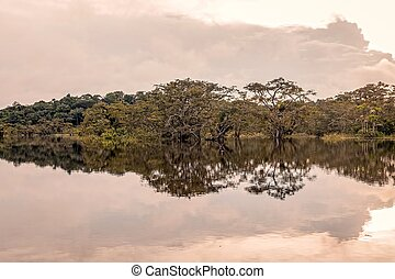 Bushes Reflecting On The River, Amazonian Jungle - Bushes...
