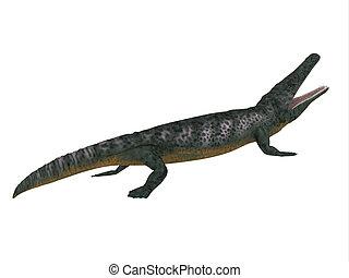 Archegosaurus Side Profile - Archegosaurus was an amphibian...