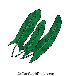 Three green leaves of sorrel. Vector illustration. - Three...