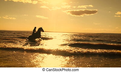 Horse-riding at the beach on sunset background. Galloping at...