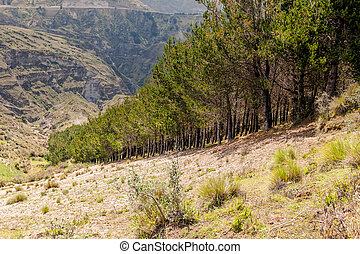 Valley With Trees In Andes Mountains, Ecuador, South America